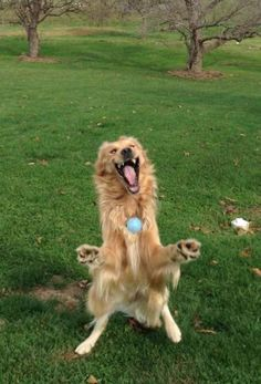 This Dog Catching a Ball Looks Like a Muppet on Crack