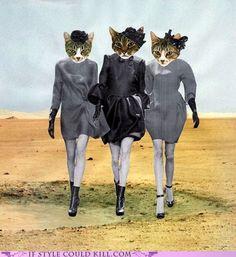 colaj pisici - catwalk and cat women.