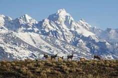 Jackson Hole resort in the heart of the Grand Tetons is as famous for it's terrain as it is it's western heritage.  Ride the steeps, slash the dry powder and take in the breathtaking views.  It's tough to find a town with such rich character and history.  Watch out for the moose though.