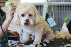 Filziges Haar bei deinem Hund ist nicht nur ein Schönheitsfehler, sondern kann ernsthafte Folgen haben – hier ist das ABC der Hundepflege!