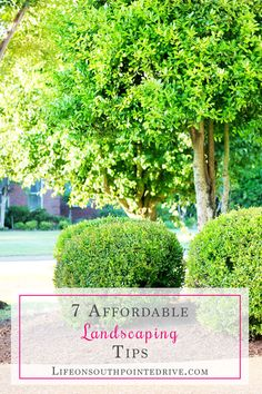 If you're looking for ways to update your landscaping, check out these 7 affordable landscaping tips for a huge impact without breaking the bank!