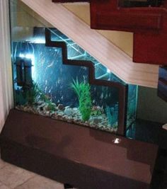 Storage under the staircase Maybe attractive Mondrian organization of algae & seaweed (& tasty clam/lobster/crab??) tanks & a large one that looks pretty & coral reefy. Whole thing is on slide out apparatus for easy extraction & maintenance & cleaning