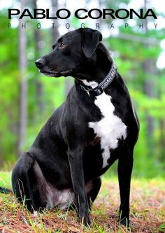 Black Velvet #dogs @Pablo Corona Photography