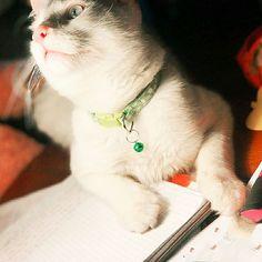 Chapichapochatpapo encore un nouveau chat blanc ! Son Chat, Cats, Animals, Cat Love, Midget Cat, Best Relationship, White Cats, Gatos, Animales