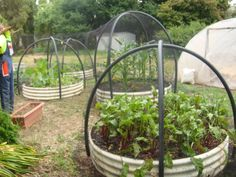 My own vegetable garden. Old water tank cut into 4 equal pieces. Poly pipe and stakes with netting to protect from hungry birds! Vege Garden Ideas, Veg Garden, Vegetable Garden Design, Edible Garden, Garden Pond, Vegetable Gardening, Green Landscape, Landscape Design, Tire Garden