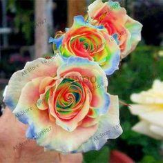 Flower garden Roses - 200 pcs Rare Holland Rainbow Rose Flower seeds Home Garden Rare Flower Seeds 24 color rainbow Rose Seeds
