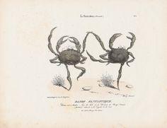 Danse Fantastique 1830s - Caricature magazine by peacay, via Flickr