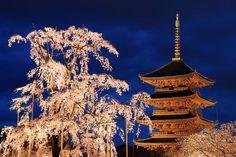 """日本の魅力はココにある。世界遺産""""古都京都の文化財""""17個総まとめ"""