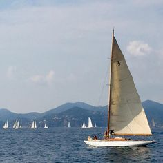 """""""It is regatta season in the Med and we are enjoying the sights, sounds and excitement of it all. Sailing Regatta, La Croisette, Palais Des Festivals, Cannes France, World Famous, French Riviera, Sandy Beaches, Modern Buildings, Sailing Ships"""