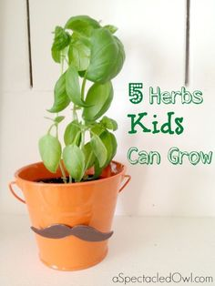 5 Herbs That Are Easy Enough For Kids To Grow. Make Gardening fun!