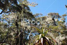 Kahurangi Skyline with Mountain Neinei in the foreground Royalty Free Stock Photo