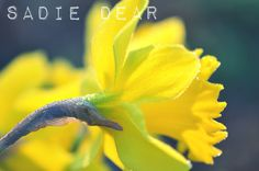 Love the color and detail of this macro from @Sadie Dear!