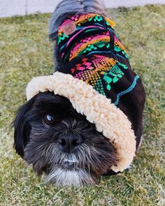 Monday has been cancelled go back to SLEEP Survive this monday with our comfortable and fantastic Cartagena Coat Dog Fashion, Survival, Sleep, Poses, Coat, Animals, Instagram, Cartagena, Figure Poses