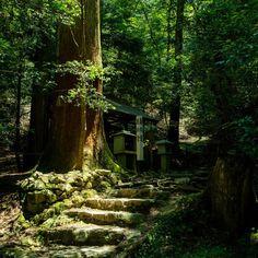 息上がりすぎて手振れだらけでまともなの撮れてない!Σ( ̄□ ̄;) 作戦 無心の境地(*´-`) #写真撮ってる人と繋がりたい #写真好きな人と繋がりたい #ファインダー越しの私の世界 #一眼 #ptk_japan  #as_archive #ig_japan  #japan_daytime_view  #loves_nippon  #team_jp_ #estetikizler #planet_forever #bestjapanpics #icu_japan #phos_japan #japan_night_view #鞍馬寺 #京都府 #一人旅