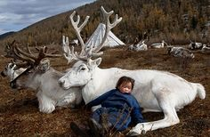 A child sleeps against the side of a beautiful white reindeer. | The Tsataan Reindeer Herders of Mongolia #photography