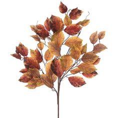 Aspen Leaf, Aspen Trees, Nature Decor, Boho Decor, Book Corner Display, Willow Sticks, Grass Decor, Stick Photo, Branch Decor