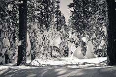 Ansel Adams grove by WaFp, via Flickr
