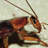Q: Do cockroaches bite?  A: Yes but they don't usually bite humans. Find out more on the Big Blue Bug blog.
