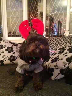 Christmas festivities Bolli style!