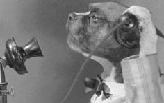 """""""Hello, This is Dog."""" """"Well Hello, Dog, This is Dog."""""""