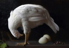 yoga for hens eggs.  Lucy Snowe Photography
