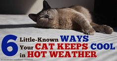 Here are six ways to keep your pet cat cool and comfortable during hot weather. http://healthypets.mercola.com/sites/healthypets/archive/2014/08/23/keep-cats-cool.aspx