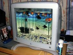 take your old Mac monitor and make it into a fish aquarium! Underwater Life, Fish Tanks, Macs, Aquariums, Aquarium Fish, Reuse, Monitor, Restoration, Fishing