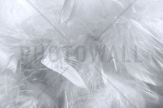 Feather Pattern - Wall Mural & Photo Wallpaper - Photowall