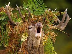 Buzz: Quand les animaux tirent de drôles de têtes - Culture - lematin.ch …
