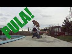 Como ensinar seu cachorro a pular por partes do seu corpo - Adestramento...