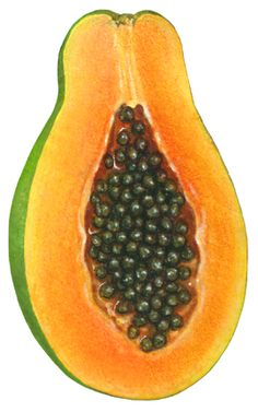 Realistic watercolor tropical fruit stock art illustrations including banana, mango, pineapple, figs, and pomegranate. Fruit Illustration, Food Illustrations, Watercolor Illustration, Watercolor Paintings, Vegetable Diet Plan, Fruit And Vegetable Diet, Fruits Images, Fruits Pics, Fruits For Glowing Skin