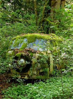 Aged with beauty - green covered abandoned old VW Bus Abandoned Buildings, Abandoned Houses, Abandoned Places, Abandoned Vehicles, Vw Bus, Vw Caravan, Vw Camper, Caravan Paint, Campers