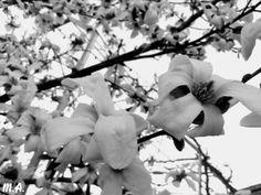 Flori alb-negru