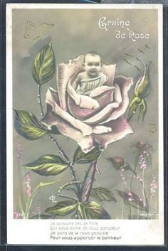 PV178-SURREALISM-FANTASY-SEED-ROSES-BABY-PINK-ROSES-FRENCH-Tinted-PHOTO-pc