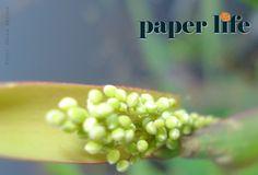 Na ponta dos dedos ! #natureza#nature #photo #fotografia #foto #flores #flowers #environment