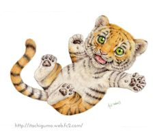 Baby tiger by Kei-Naito