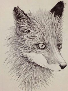A wolf drawing, by pencil