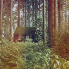 cabin hidden amongst the trees (photo by Anna Shelton)
