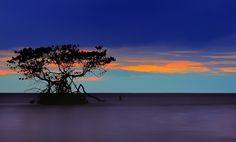 Mangrove in Sunset by Shahrunizam Awang, via 500px