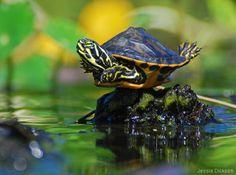 turtle joy