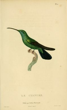 Histoire naturelle des colibris : - Biodiversity Heritage Library