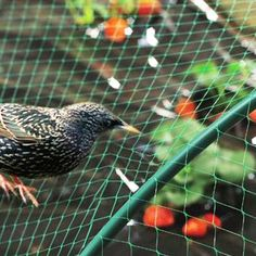 Bird Netting installation services in Bangalore and Mumbai. Hicare specializes in anti-bird netting services by Trained Experts. We offer Special HDPE net quality. Get high-quality anti-bird netting for your residential building. Bird Netting, Mini Rolls, Stainless Steel Metal, Filets, Birds, Poultry Farming, Kingfisher, Peacocks, Animales