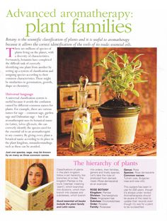 advanced aromatherapy plant families