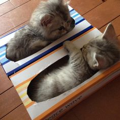 Kittens in Kleenex boxes