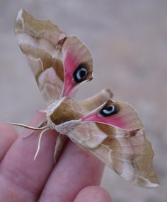 Moth: the most amazing under rated creatures.