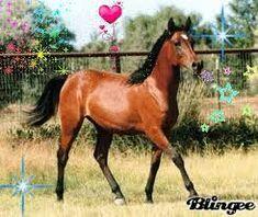 """Résultat de recherche d'images pour """"beau cheval bai"""""""