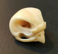 Small Falcon skull carved from a tagua nut. By Andrew Birks 2016