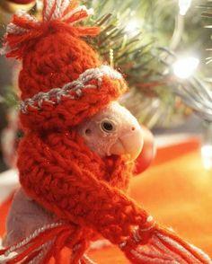 Budgies, Parrots, Cute Birds, Keep Warm, Beautiful Birds, Beautiful Creatures, Mother Nature, Baby Animals, Naked