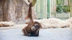 PHOTOS: Adorable Baby Zoo Animals - weather.com