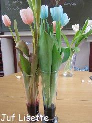Hoe drinken bloemen? We zetten witte tulpen in een vaasje rode ecoline en een paar tulpen in een vaasje blauwe ecoline. Leuk in combinatie met biologieles.